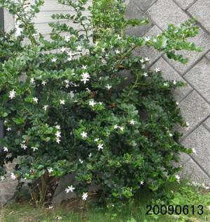 Ohbanacarissa20090613