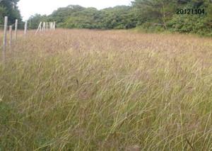 Aidagaya20121104