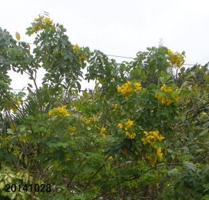 Mokusennaohmura